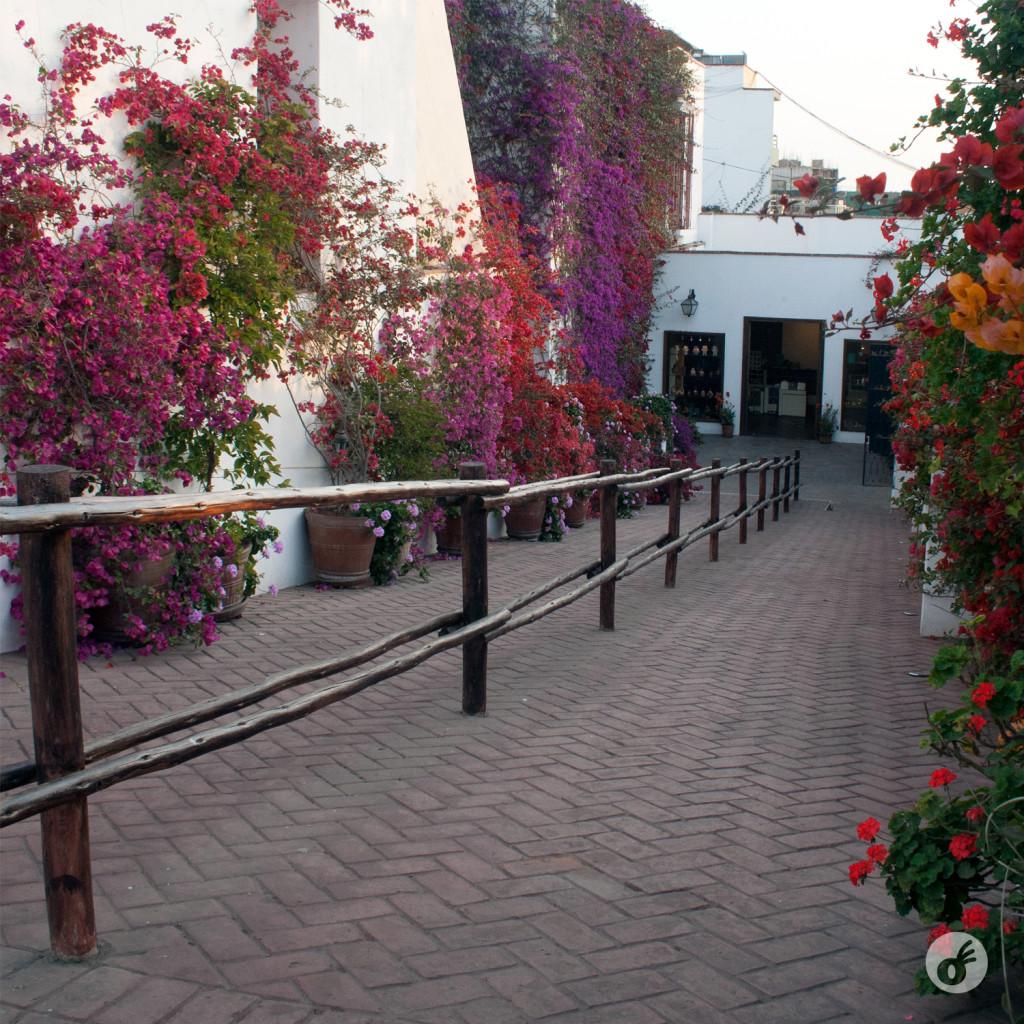 Cores e mais cores nos jardins do museu.