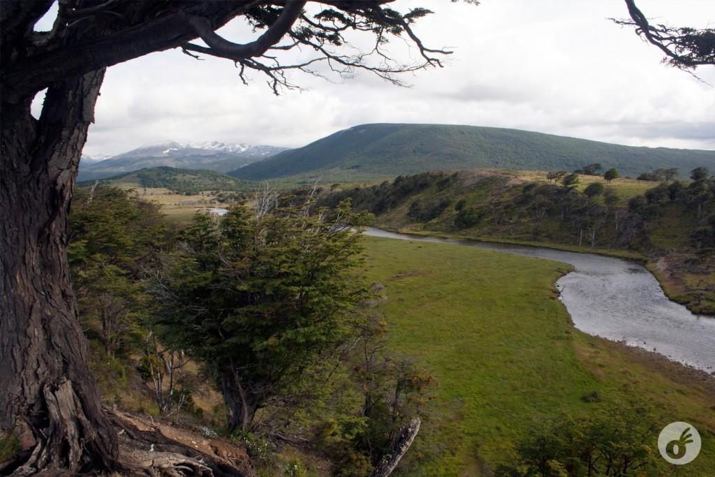 O vale é essa coisa linda e verde.